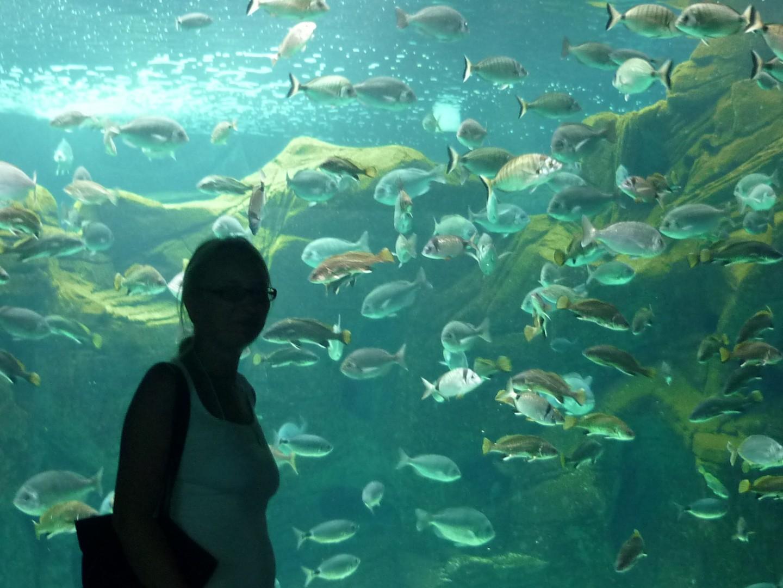 Путешествия / Греция / Крит / аквариум