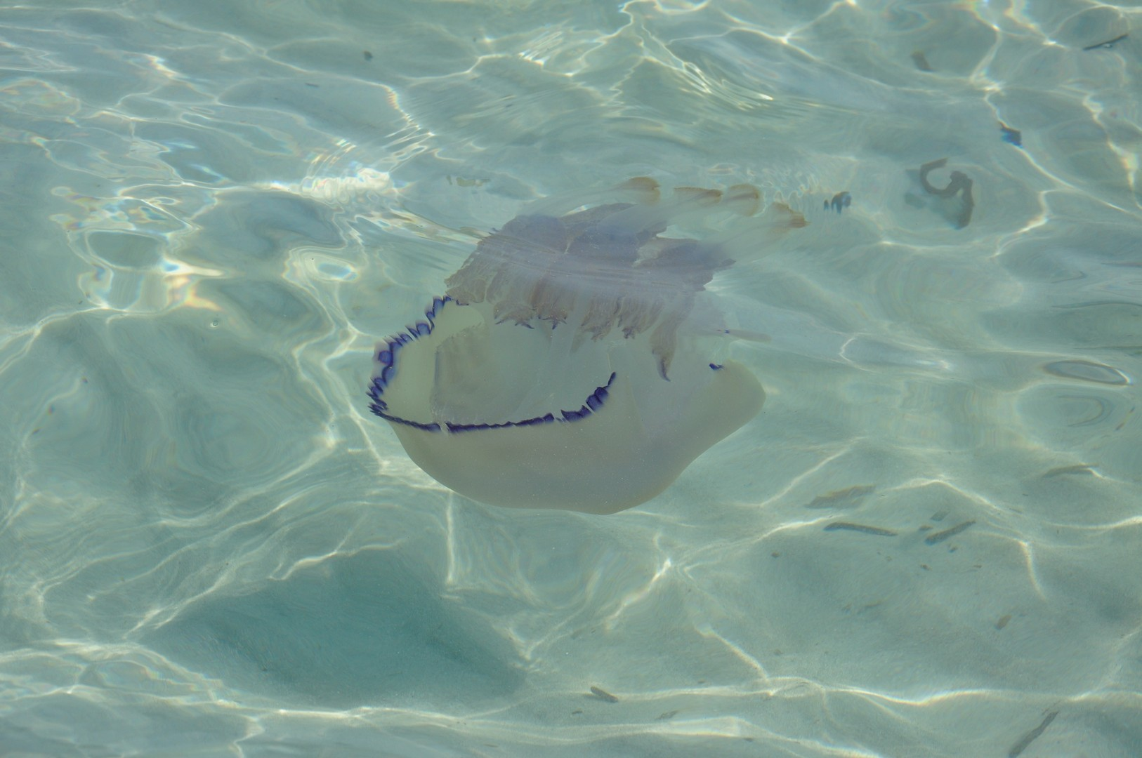Путешествия / лайфхаки / медузы