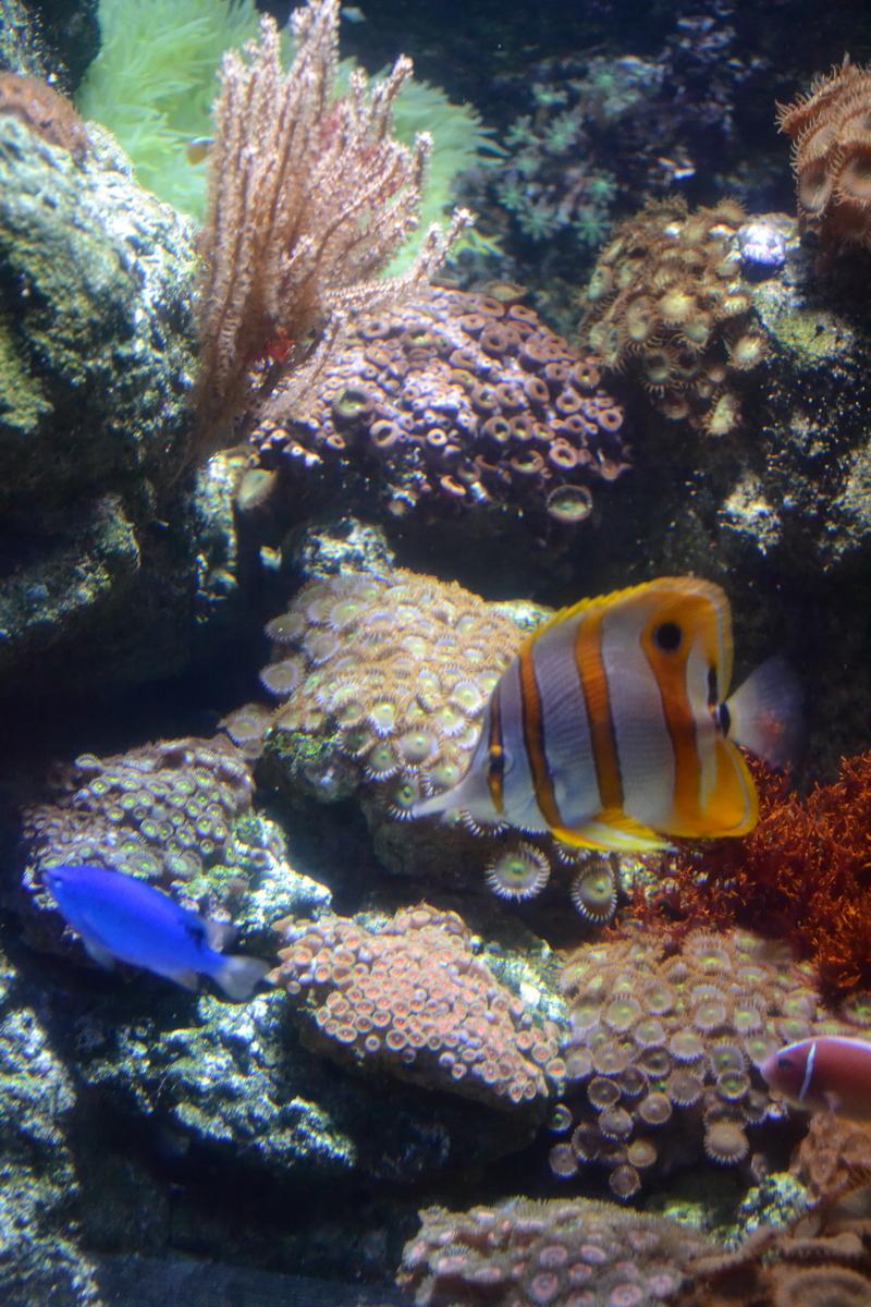 Путешествия / Европа / Франция / аквариум