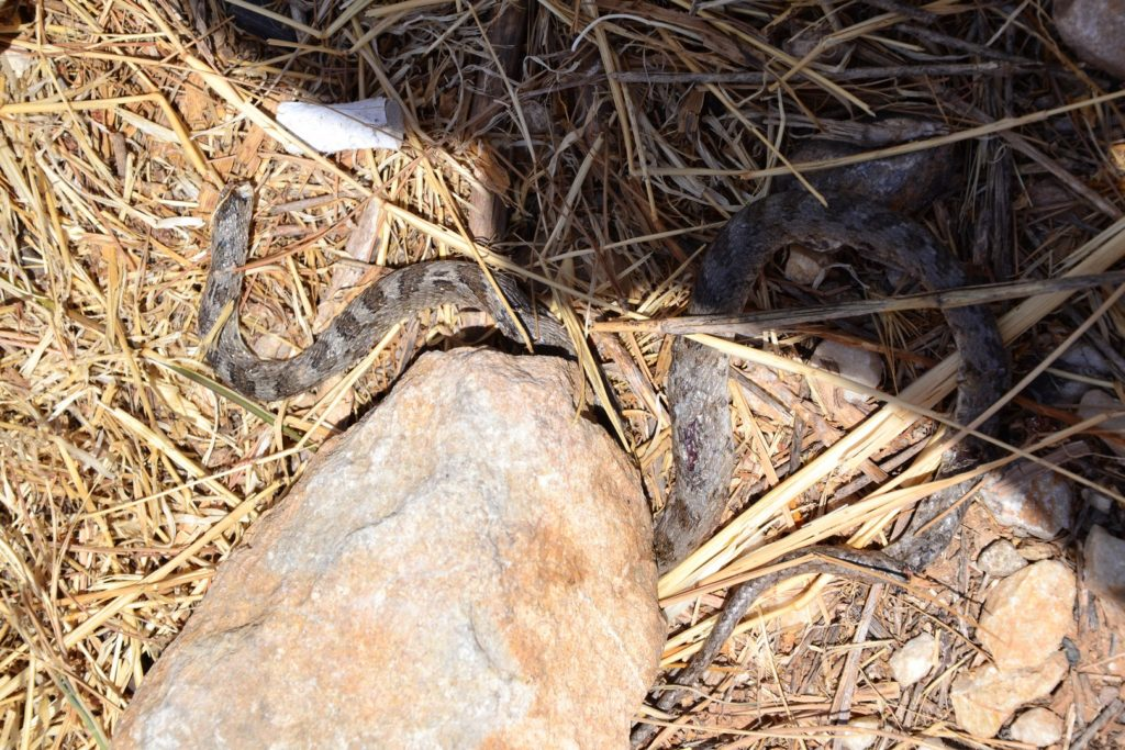 Лайфхаки / Убитая гадюка на острове Парос