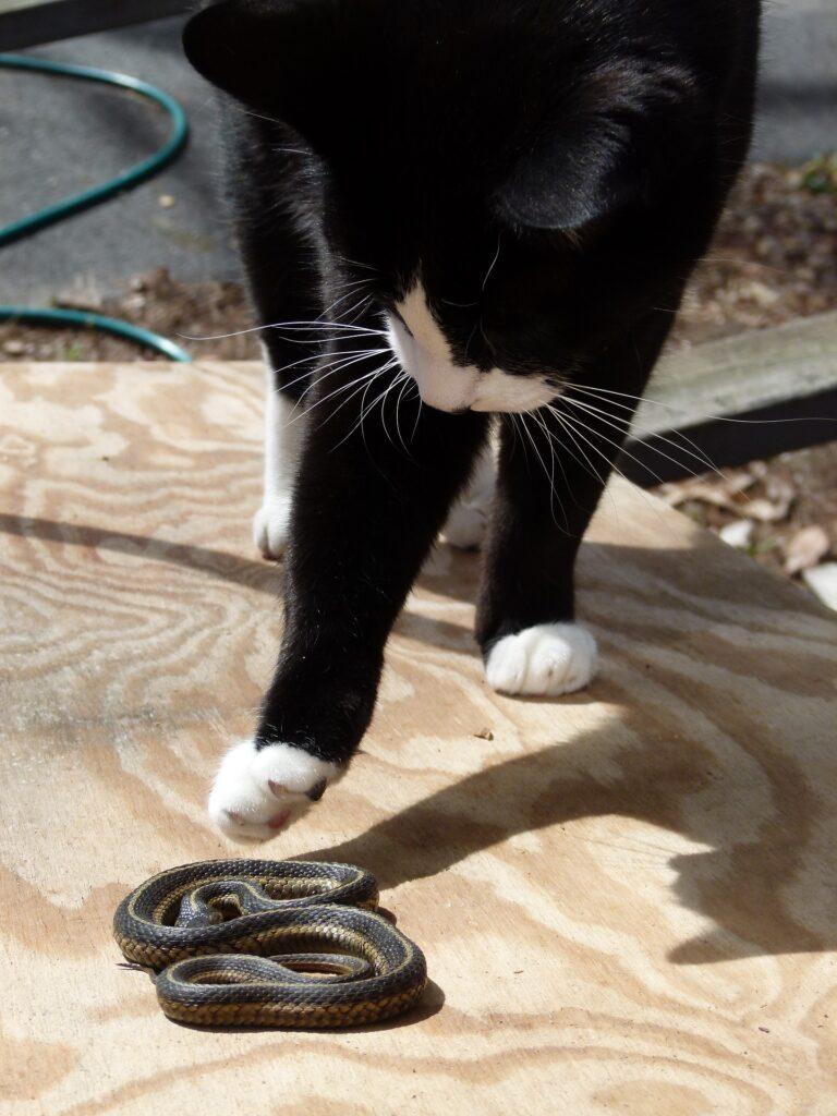 Лайфхаки / Змея и кот